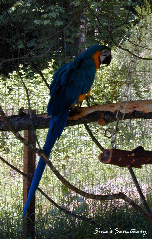 macaw02_w