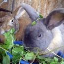 bunnies224_w