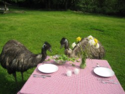 emu-picnic