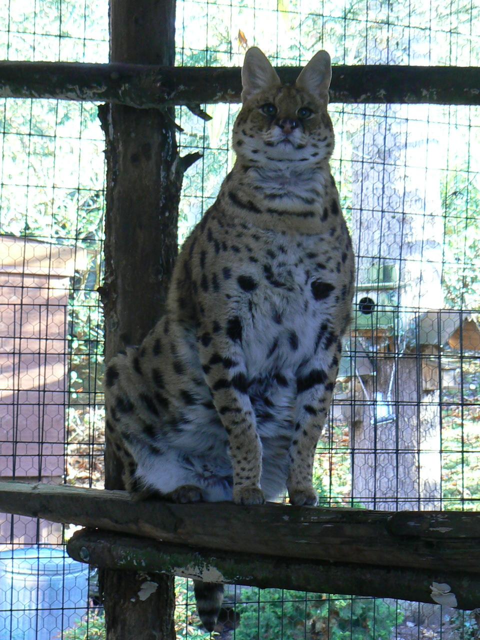 serval-rescue
